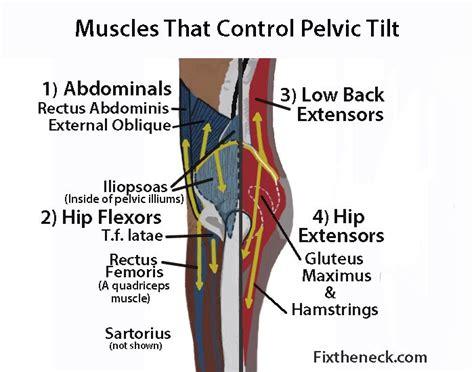 hip flexor psoas release pelvic bones labeled in the body