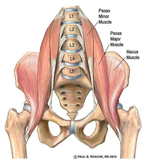 hip flexor psoas release pelvis labeled anatomy torso