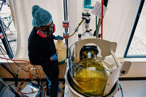 hip flexor strain images cannabis extraction technician