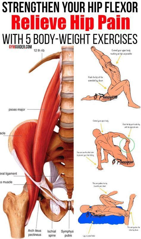 hip flexor stretch with shoulder flexion muscles and nerves