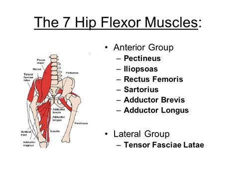 hip flexor surface anatomy
