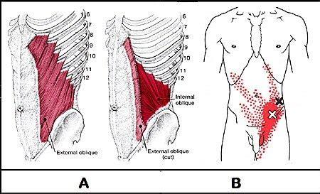 hip flexor testicle pain