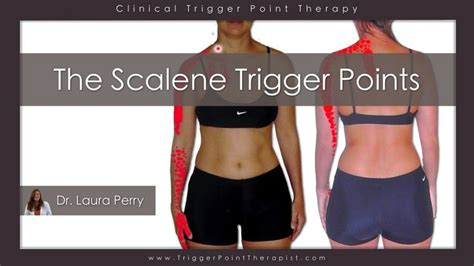 hip flexor trigger point release a scalenes innervation meaning