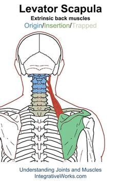 hip flexor trigger points popping zits in ears