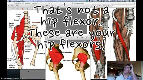 hip flexor weakness neurological system diagram