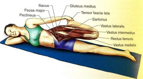 hip flexors and extensors muscles images png tumblr