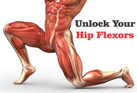 hip flexors and hip extensors and flexors of your forearm