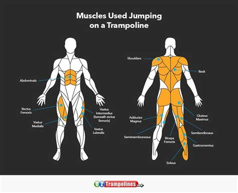 hip flexors and hip extensors muscles involved in jumping rope