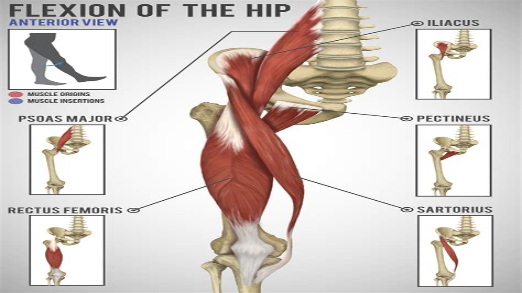hip flexors and hip extensors workout anytime glasgow