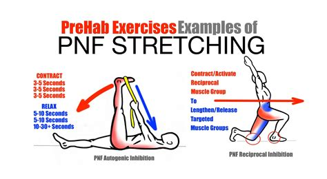 hip flexors pnf stretching techniques before exercising and after exercising