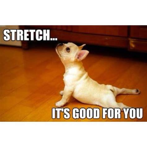 hip flexors stretch images funny animals cartoons