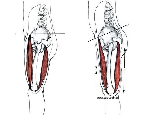 hip flexors tight hamstrings pelvic tilt exercise pregnancy