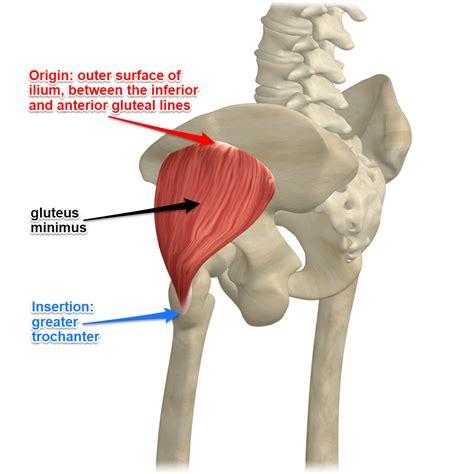 hip gluteus minimus insertional tendinosis hippo
