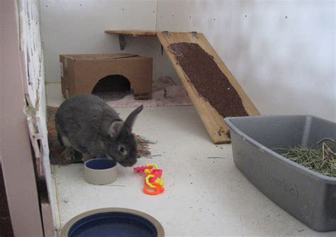House Rabbit Care