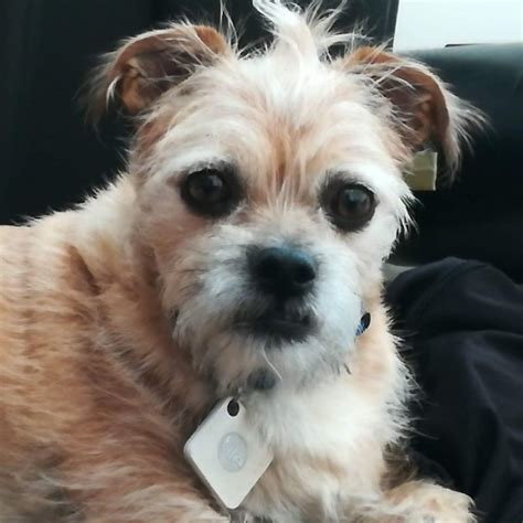 how to keep a dog from barking outside