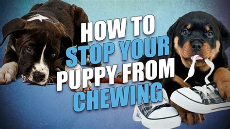 how to stop my puppy from chewing