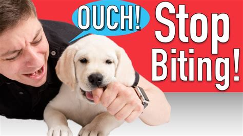 how to teach a dog to stop biting