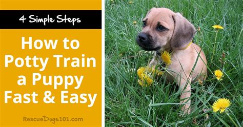 how to train a dog fast