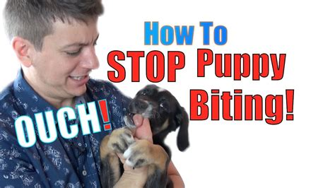 how to train a puppy not bite