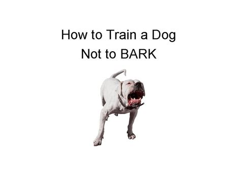 how to train your dog to not bark