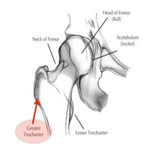 how to pop hip bones anatomy muscles