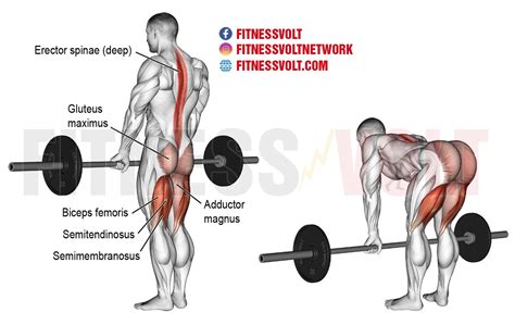 how to relieve lower back tightness during deadlift muscles group
