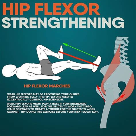 how to strengthen your hip flexor muscles and their movements