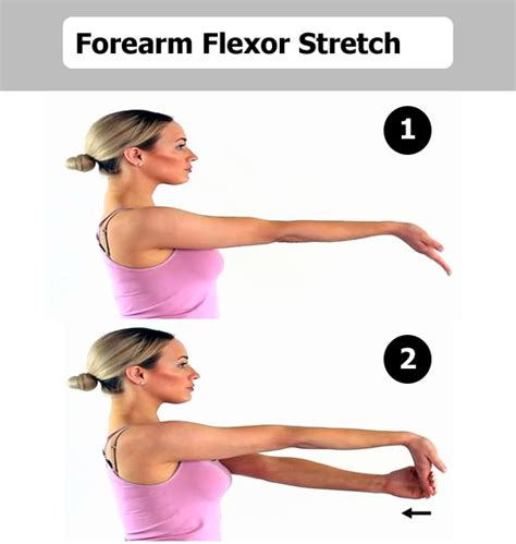 how to stretch hip flexors and extensors muscles of forearm and elbow