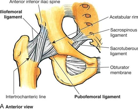 how to stretch the hip joint capsule anatomy shoulder mri