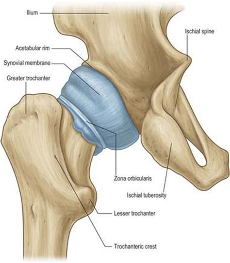 how to stretch the hip joint capsule injury thumb