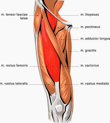 how to treat hip flexor tendonitis in dancers inc competition