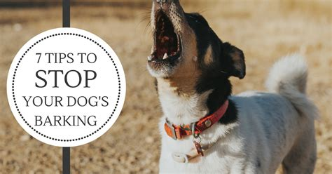 How Do I Stop My Dog Barking At The Tv