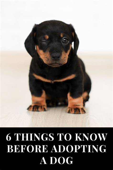 How Do You Know If Adopted Dog Is Potty Trained