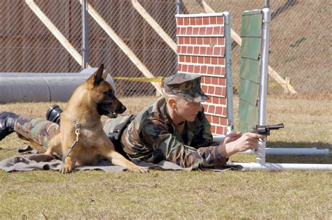 How The Military Trains Dogs