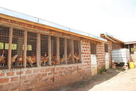 How To Build Poultry House In Nigeria