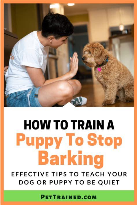 How To Get Dog To Stop Barking At Bikes