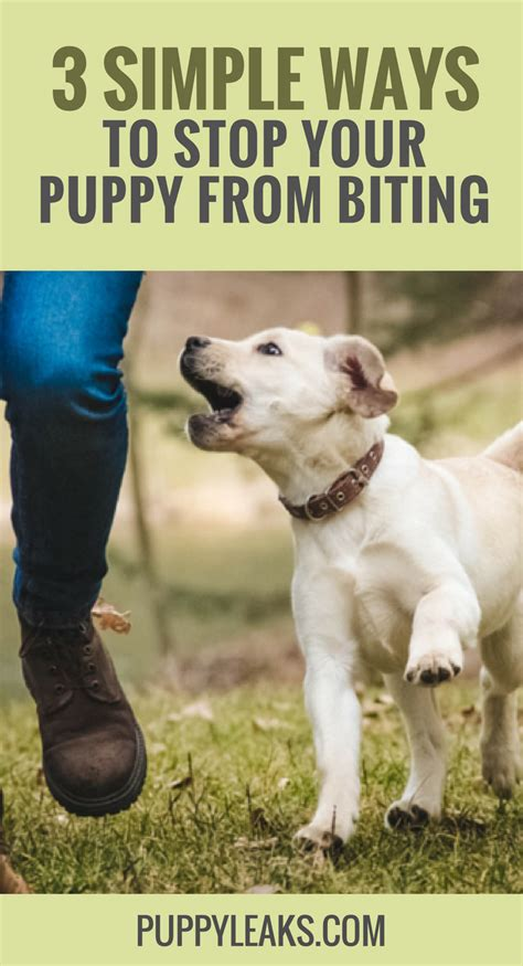 How To Get Puppy From Biting