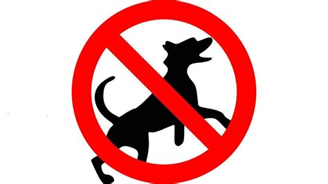 How To Stop A Dog Barking Ultrasonic Bark Control Keep A Dog Out Of Garden 12 Hours