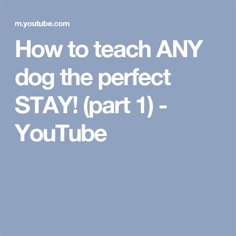How To Teach Any Dog The Perfect Stay Part 1