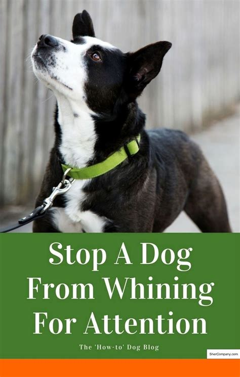 How To Teach Dog To Stop Barking At Strangers