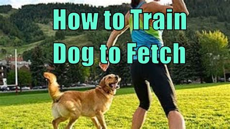 How To Train A Dog To Fetch Youtube