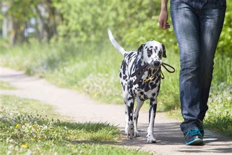 How To Train A Dog To Follow