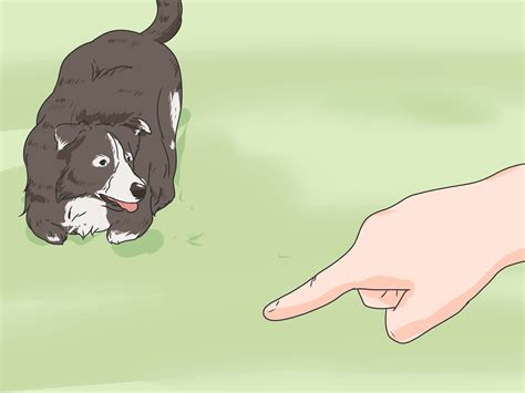 How To Train A Timid Dog To Come