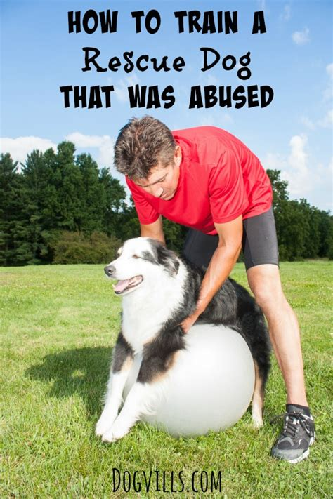 How To Train Abused Dogs
