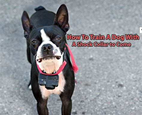 How To Train Dog To Come With Shock Collar