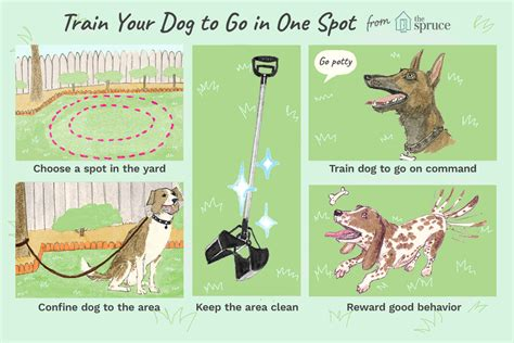 How To Train Dogs To Poop In One Area