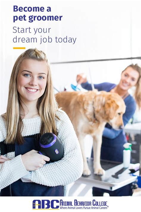 How To Train To Become A Dog Groomer
