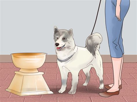 How To Train Your Dog For Dog Shows