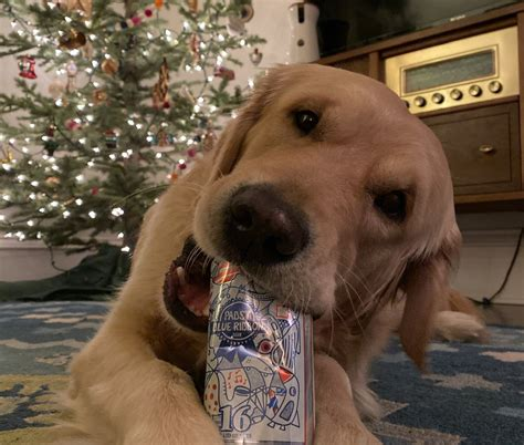 How To Train Your Dog To Go To The Bathroom
