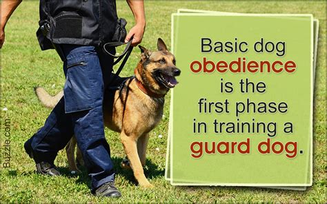 How To Train Your Dog To Guard Something